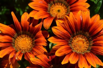 květiny zahrada